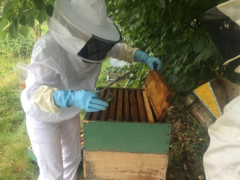 APIRUN miel pour sportif 100 % bio